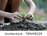 planting young tree by kid hand ... | Shutterstock . vector #789698239
