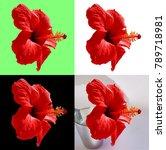 red hibiscus in 4 backgrounds   ... | Shutterstock . vector #789718981