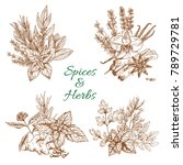 spices and herbs seasonings of...   Shutterstock .eps vector #789729781