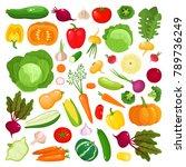bright vector illustration of...   Shutterstock .eps vector #789736249