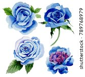 Stock photo wildflower blue rose flower in a watercolor style isolated full name of the plant rose hulthemia 789768979
