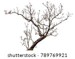 Flower Tree Isolated On White...
