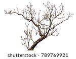 flower tree isolated on white...   Shutterstock . vector #789769921