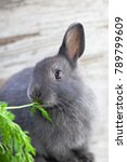 cute grey bunny eating carrots... | Shutterstock . vector #789799609