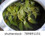 asian traditional herbal leaf... | Shutterstock . vector #789891151
