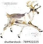caribou. reindeer watercolor... | Shutterstock . vector #789922225