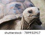 Stock photo aldabra giant tortoise turtle rodgrigues island mauritius cave reserve mascarene island last 789932917