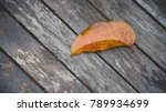 yellow leaves on old wood | Shutterstock . vector #789934699