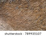 Deer Abstract Background Fur