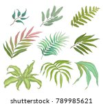 collection of tropical colorful ... | Shutterstock .eps vector #789985621