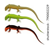 set of colored lizard icons...   Shutterstock .eps vector #790002229