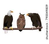 birds of prey set   bald eagle  ... | Shutterstock .eps vector #790049809