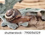 Small photo of The snail creeps on a wooden table. Close up, selective focus.