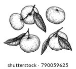 mandarin orange set. ink sketch ... | Shutterstock .eps vector #790059625