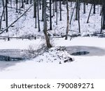 a beaver lodge after snow in...   Shutterstock . vector #790089271