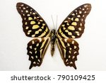 Tailed Jay Graphium Agamemnon...