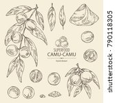 collection of camu camu  branch ... | Shutterstock .eps vector #790118305