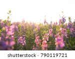 beautiful flowers in sunset... | Shutterstock . vector #790119721