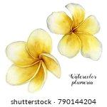 watercolor plumeria set. hand... | Shutterstock . vector #790144204