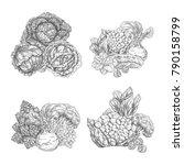 cabbage vegetable and lettuce... | Shutterstock .eps vector #790158799