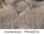 Hermit Crab Tracks On Sand