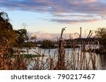 Union Bay Natural Area, Seattle, Wahington