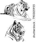 vector drawings sketches... | Shutterstock .eps vector #790305955