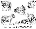 vector drawings sketches... | Shutterstock .eps vector #790305961