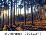 sun rays between trees in forest | Shutterstock . vector #790311547