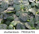 Deep Green Foliage With...