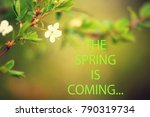 text the spring is coming and... | Shutterstock . vector #790319734
