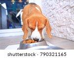beagle dog eats food from steel ... | Shutterstock . vector #790321165