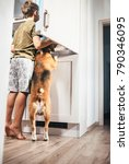 boy and dog try to find... | Shutterstock . vector #790346095