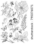 vintage botanical illustration... | Shutterstock .eps vector #790376071