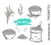 vector rice hand drawn sketch . ... | Shutterstock .eps vector #790389751