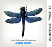 Engraving Vintage Dragonfly...
