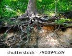 Oak  Roots  Trunk  Zuid Limbur...