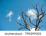 art of tree branch and sky...   Shutterstock . vector #790399201
