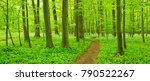 Hiking Path Trough Forest Of...