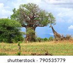 tarangire national park  ... | Shutterstock . vector #790535779
