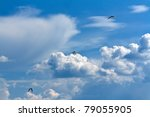 Three Seagulls In The Sky With...