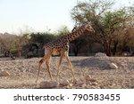al ain  united arab emirates  ... | Shutterstock . vector #790583455