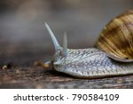 forest snail on wooden bench  | Shutterstock . vector #790584109