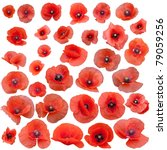 Set Of Field Poppies. Isolated...