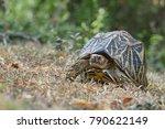 indian star tortoise  ... | Shutterstock . vector #790622149