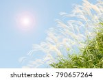 autumn sky and japanese silver... | Shutterstock . vector #790657264