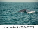 blue whale dripping tail fin ... | Shutterstock . vector #790657879