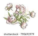 beautiful hand drawn bouquet of ... | Shutterstock .eps vector #790692979