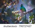threatened resplendent quetzal  ... | Shutterstock . vector #790727437