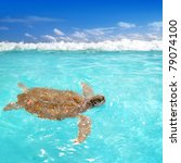 green sea turtle chelonia mydas ... | Shutterstock . vector #79074100
